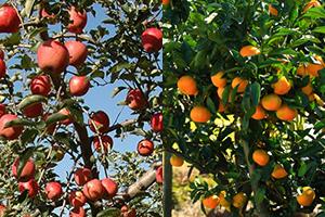 02c_fruitspark
