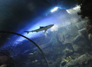 Shark Reef Aquarium at Mandalay Bay. 7-22-10. Darrin Bush photo.