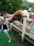 02「大人しそうな馬に息子を近づけようとしたママ…その瞬間、いきなり馬が動いて驚くママと冷静な息子!表情のギャップに笑ってしまいました。」