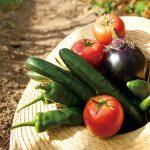 農園で収穫体験! 採れたて京野菜で感じる「農業」